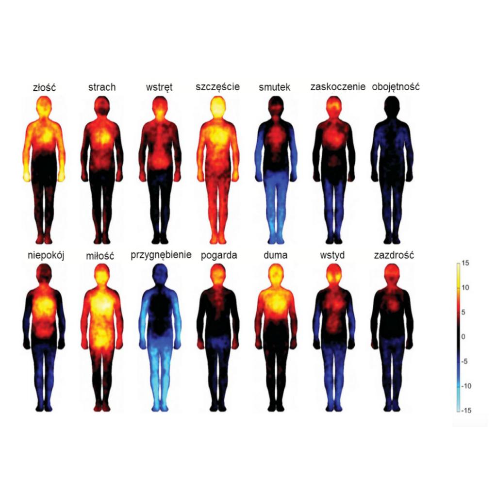 Obrazek przedstawiający sylwetki ludzi z zaznaczonymi na czerwono lub niebiesko częściami ciała w zależności od rodzaju emocji.